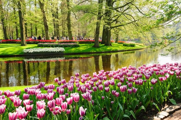 Klomby ogrodów keukenhof w lisse, holandia