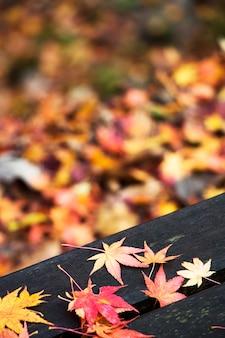 Klon czerwony pozostawia w sezonie jesiennym