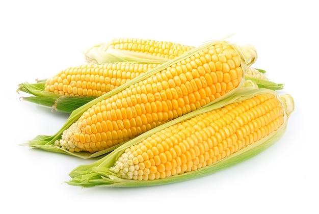 Kłos kukurydzy na białym tle