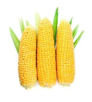 Kłos kukurydzy na białym tle.