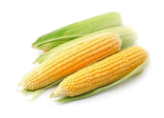 Kłos świeżej kukurydzy na białym tle