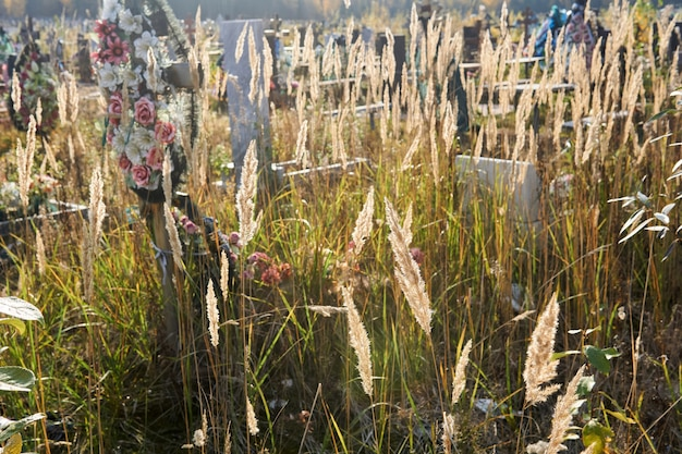 Kłoski suchej jesiennej trawy rosnącej na cmentarzu w słońcu