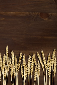 Kłosy pszenicy i ziarna na ciemnym tle drewniane. jesienne zbiory roślin zbożowych.