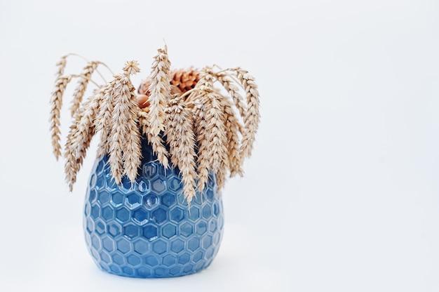 Kłosy pszenicy na niebieskim wazonie na białym tle