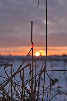 Kłosy trawy na tle zimowego pola