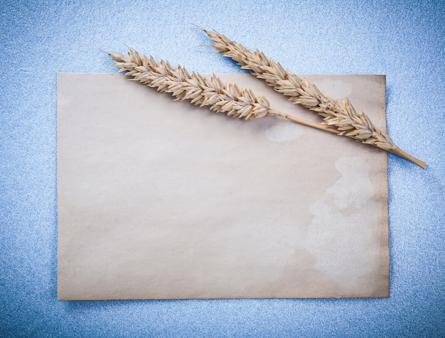 Kłosy żyta i wzór papieru na niebieskiej powierzchni
