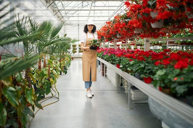 Kobieca kwiaciarnia pozuje w szklarni z doniczką w rękach