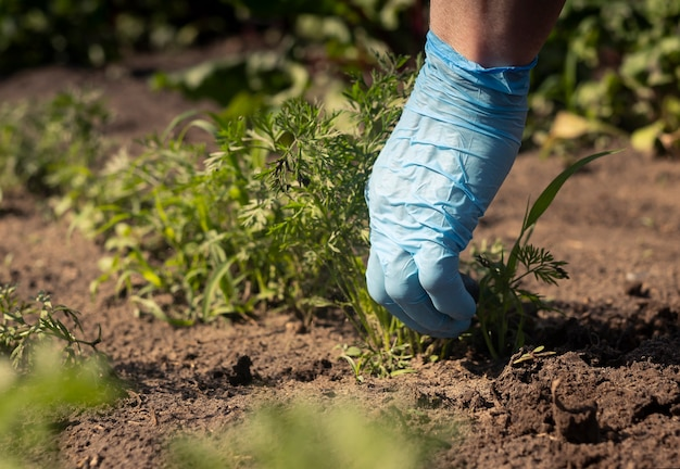 Kobieca ręka w rękawicy usuwa chwasty z gleby w ogrodzie i pracuje z bliska