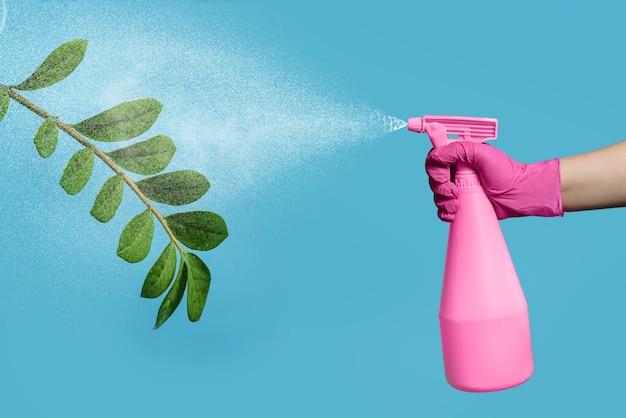 Kobieca ręka w różowej rękawiczce spryskuje kwiat wodą z butelki z rozpylaczem. pielęgnacja roślin doniczkowych. ręka z pistoletem natryskowym i kwiatkiem
