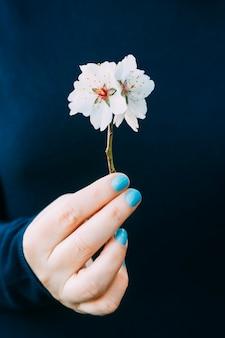 Kobieca ręka z paznokciami pomalowanymi na jasnoniebiesko, delikatnie trzymająca gałąź drzewa migdałowego