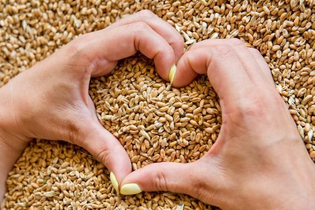 Kobiece dłonie w kształcie serca na tle nasion pszenicy.