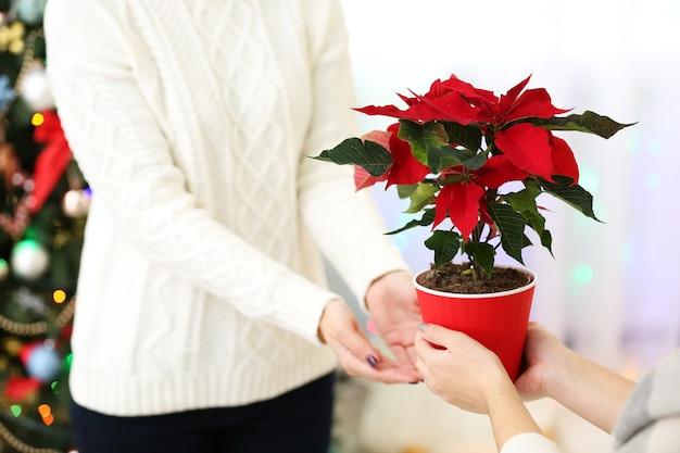 Kobiece dłonie z bożonarodzeniową poinsecją, na jasnej powierzchni