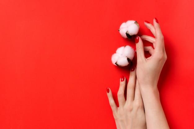 Kobiece dłonie z czerwonym manicure utrzymują białe bawełniane kwiaty. copyspace