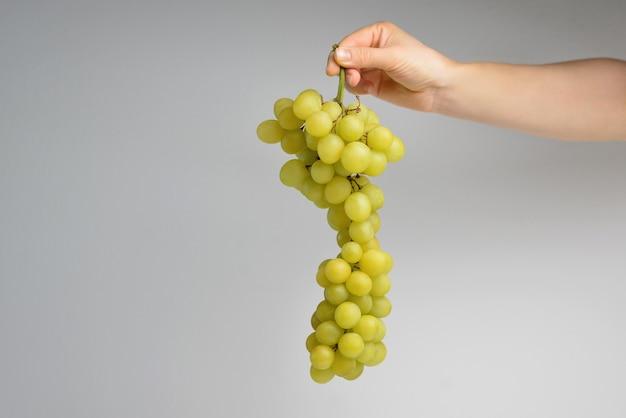 Kobiece dłonie z dojrzałymi zielonymi winogronami na jasnym tle świeże dojrzałe winogrona w kobiecej dłoni