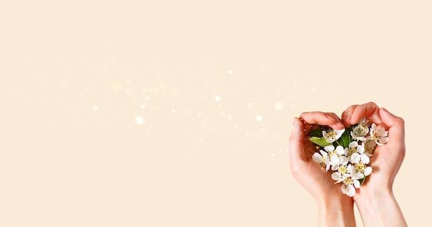 Kobiece dłonie z palmami w kształcie serca i białymi kwiatami jabłoni na tle szampana róż. wiosna, miłość, czułość. pielęgnacja skóry, kosmetyki naturalne. baner, miejsce na tekst