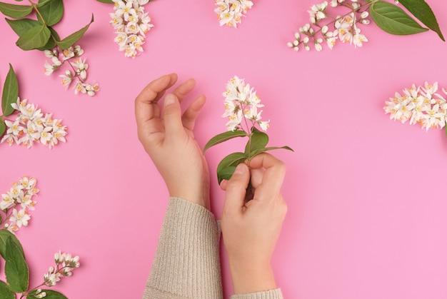 Kobiece ręce i małe białe kwiaty na różowym tle