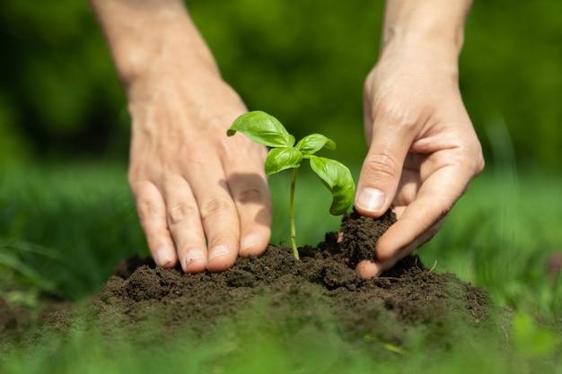 Kobiece ręce sadzenia młodych roślin koncepcja rolnictwa i ochrony środowiska