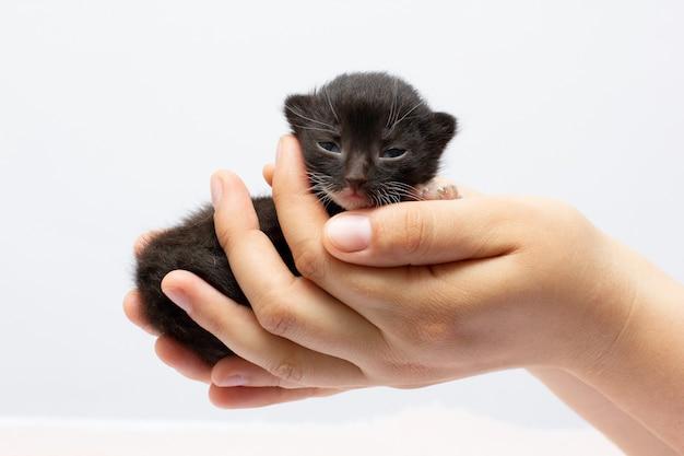 Kobiece ręce trzymające czarnego kotka