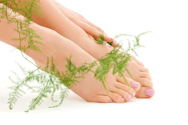 Kobiece stopy z zieloną rośliną na białym
