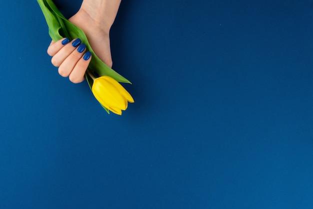 Kobiet ręki z manicure'em trzyma kolorowych tulipany na błękitnym tle