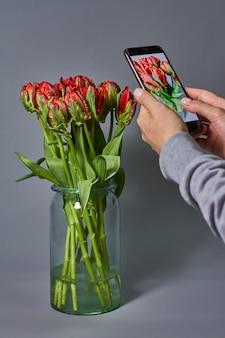 Kobieta bierze fotografię czerwony tulipanu bukiet w szklanej wazie na smartphone. piękny tulipanowy kwiat dla pocztówkowego piękna i designu.
