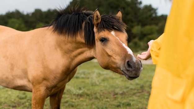 Kobieta chce dotknąć dzikiego konia