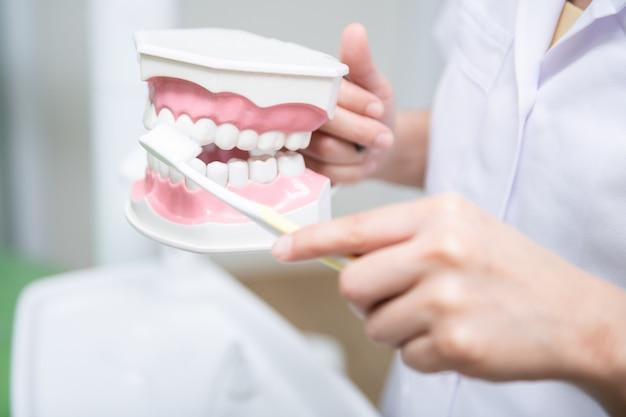 Kobieta dentysty ćwiczy pracę na zębu modelu