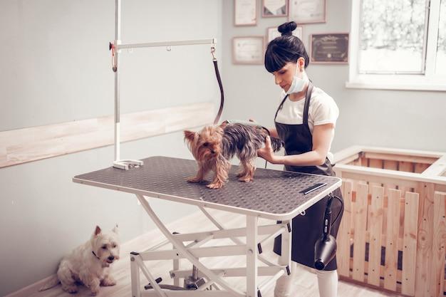Kobieta do golenia psa. ciemnowłosa młoda kobieta ubrana w jednolitego psa do golenia w salonie fryzjerskim