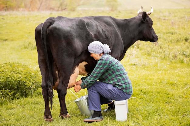 Kobieta dojenie krowy