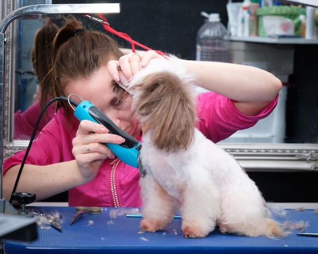 Kobieta groomer goli włosy chińskiego grzywacza w salonie dla zwierząt.