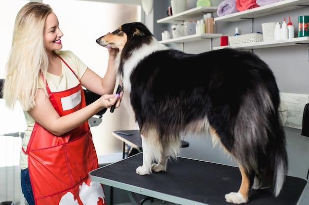 Kobieta groomer szczotkowanie psa rasy collie szorstki w salonie fryzjerskim.