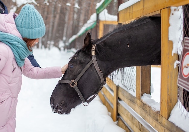 Kobieta karmi konia w zoo zimą. koń wystawił głowę przez płot i je