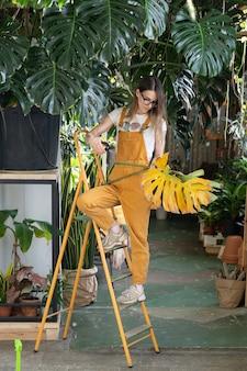 Kobieta kwiaciarnia pracuje w przydomowym ogrodzie lub roślinie doniczkowej