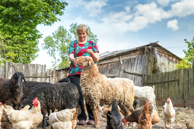 Kobieta na farmie owiec, zwierzęta i przyroda