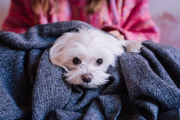 Kobieta na łóżku w domu owinięta w koc z uroczym maltańskim psem