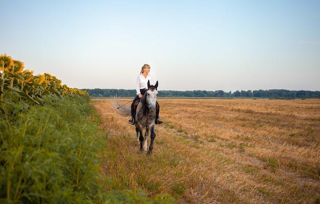 Kobieta na szarym koniu w polu o zachodzie słońca. jazda konna, wynajem, piękne tło, domek. przyjaźń i miłość ludzi i zwierząt. zwierzę domowe. sport jeździecki. słoneczniki