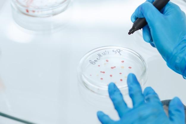 Kobieta naukowiec znakująca kolonię bakterii na szalce petriego