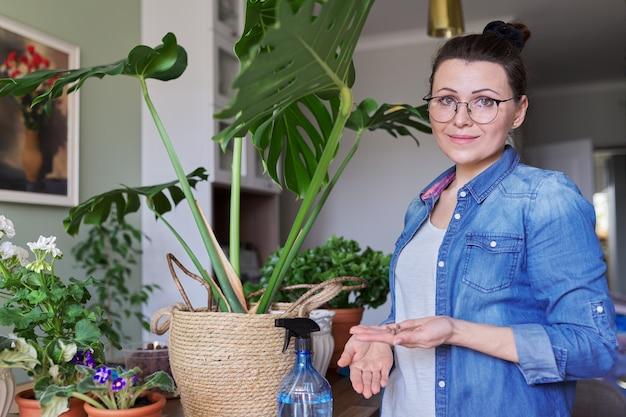 Kobieta nawozi roślinę monstera w doniczce z nawozem mineralnym w patykach w domu. uprawa i pielęgnacja roślin doniczkowych w pomieszczeniach. hobby i wypoczynek, ogrodnictwo domowe, rośliny doniczkowe, miejska dżungla