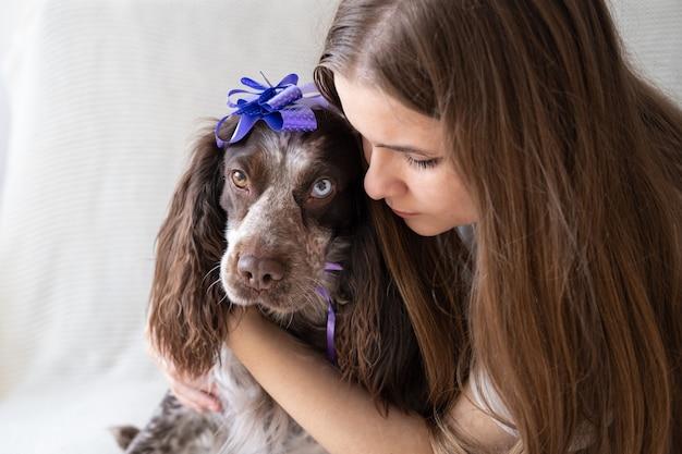 Kobieta obejmuje rosyjski spaniel czekoladowy merle różne kolory oczy zabawny pies nosi kokardę wstążki na głowie. prezent. święto. wszystkiego najlepszego z okazji urodzin. boże narodzenie.