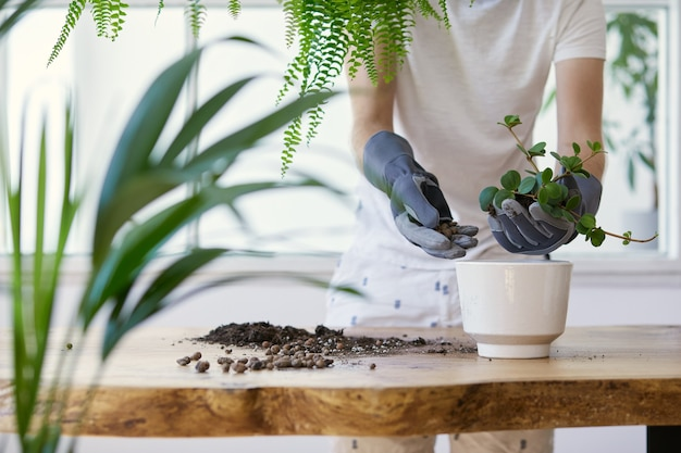 Kobieta ogrodnicy przesadzania roślin w ceramicznych doniczkach na drewnianym stole projekt. koncepcja ogrodu przydomowego. wiosna. stylowe wnętrze z dużą ilością roślin. dbanie o rośliny domowe. szablon.