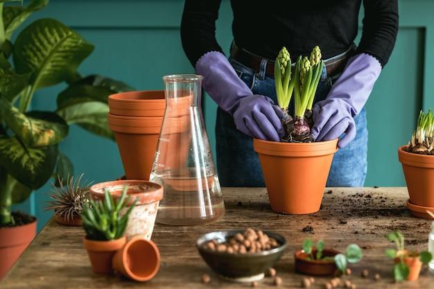Kobieta ogrodniczka przesadza piękne rośliny, kaktusy, sukulenty do ceramicznych doniczek i pielęgnuje domowe kwiaty na drewnianym stole retro dla swojej koncepcji domowego ogrodu.