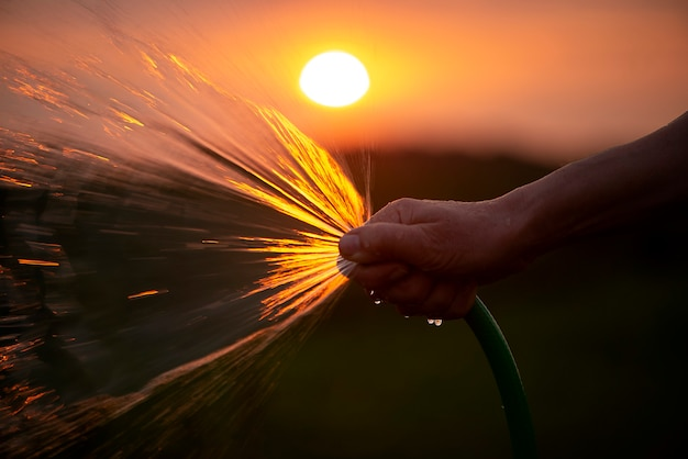 Kobieta ogrodniczka trzymająca ręczny opryskiwacz do węża i podlewanie roślin w ogrodzie o zachodzie słońca