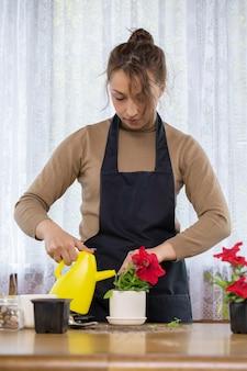 Kobieta ogrodniczka uprawiająca rośliny kwiaty w przydomowym ogrodzie, dbająca o rośliny w domu, młoda piękna kobieta kwiaciarnia podlewająca czerwono kwitnące petunie w doniczce, ogrodnictwo domowe, kwiaciarnia, hobby