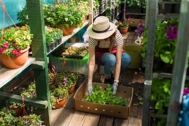 Kobieta ogrodniczka w kapeluszu i rękawiczkach pracuje z kwiatami w szklarni