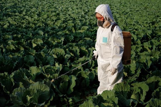 Kobieta ogrodniczka w kombinezonie ochronnym i masce w sprayu środki owadobójcze i chemia na ogromnej kapuście warzywnej