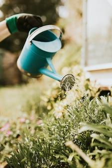 Kobieta ogrodnik podlewania roślin w ogrodzie