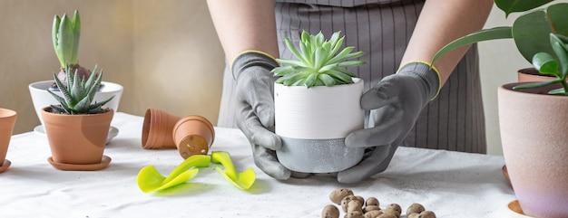 Kobieta ogrodnik ręce, trzymając sukulent w ceramicznym garnku. pojęcie domowego ogrodnictwa i sadzenia kwiatów w doniczce
