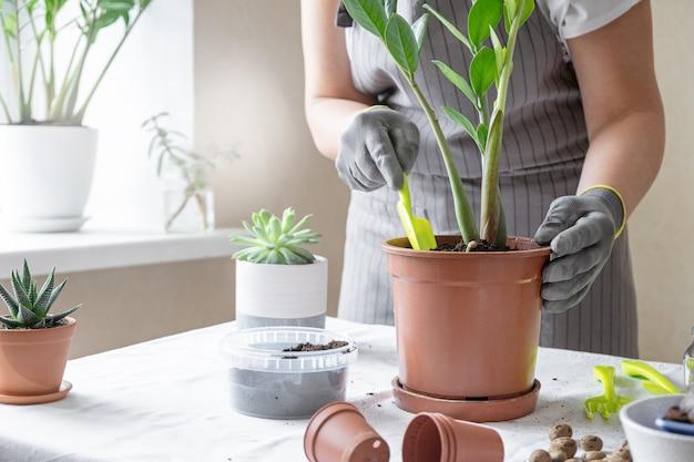 Kobieta ogrodnik rośliny do przesadzania. pojęcie domowego ogrodnictwa i sadzenia kwiatów w doniczce, dekoracji wnętrz roślin