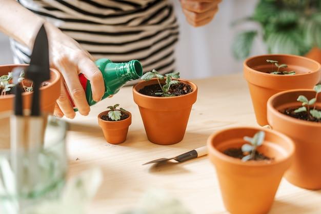 Kobieta ogrodników nawóz roślin