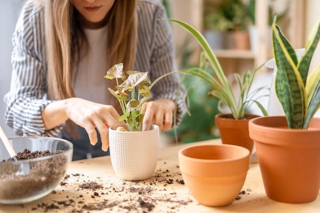 Kobieta ogrodników opiekuje się i przesadza roślinę do nowej białej doniczki na drewnianym stole.